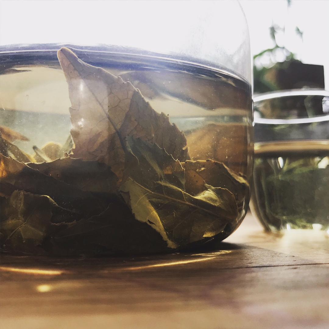 特別なお茶を北海道からお届けします。